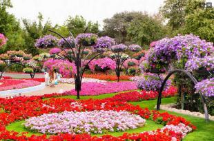 صور اجمل ورود في العالم , افضل الورود على مستوى العالم