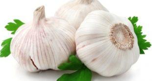 صور ماهي فوائد الثوم , استخدامات الثوم