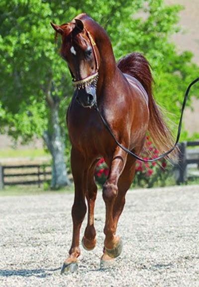 صورة صور حصان , اشكال الحصان