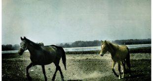 صور صور حصان , اشكال الحصان