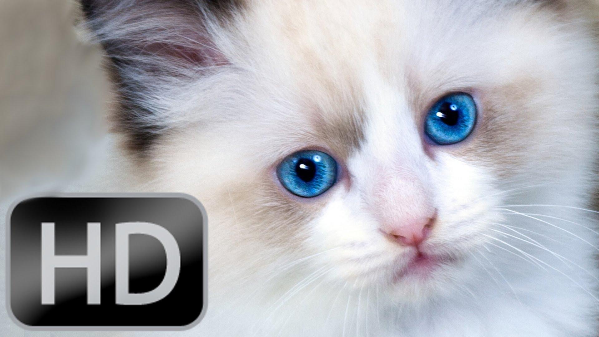 صور اجمل حيوان في العالم , صور اجمل حيوان في الكون