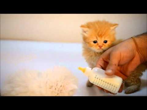 صور كيفية تربية القطط , وطريقة التعامل معها بسهولة