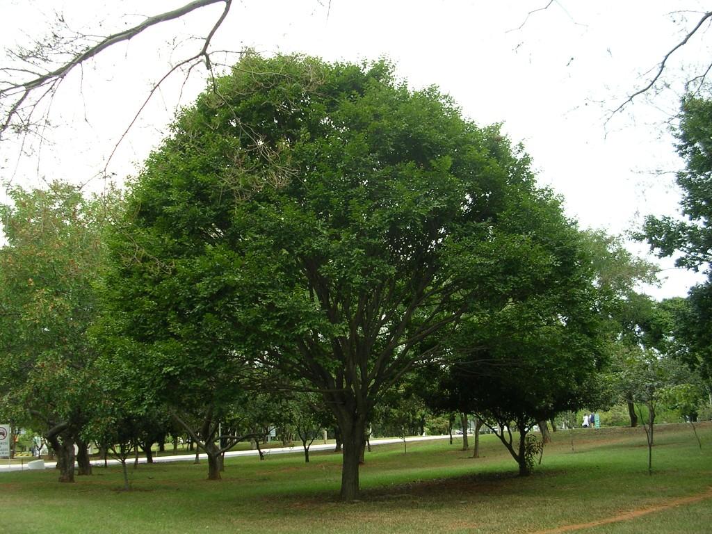 صور صور اشجار , افضل صور اشجار بتقنية عالية