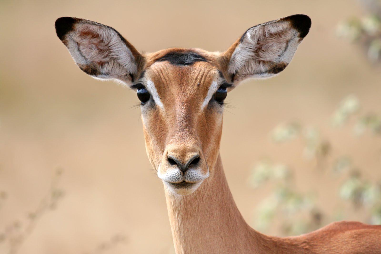 صور هل تعلم عن الحيوانات , معلومات هامة عن الحيوانات