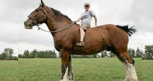 صورة اجمل خيول في العالم , خيول رائعة ومميزة