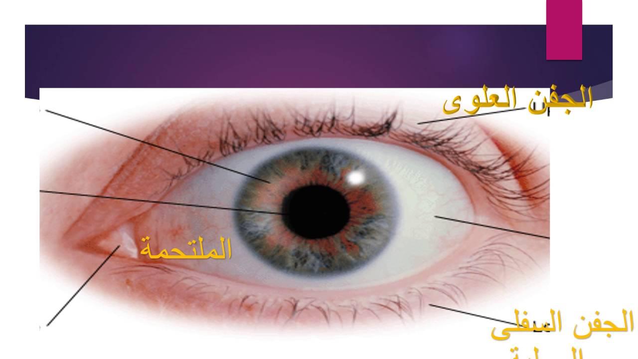 صورة مكونات العين , تعترف على تكوين العين الان