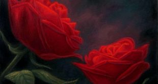 صور زهور الحب , اجمل زهور للحب 2019