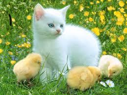 صور صور حيوانات اليفه , صور قطط وكلاب اليفه