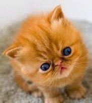 صورة صور حيوانات اليفه , صور قطط وكلاب اليفه
