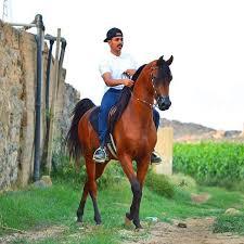 بالصور الخيل العربي الاصيل , صور الحصان العربي الاصيل 4200 16