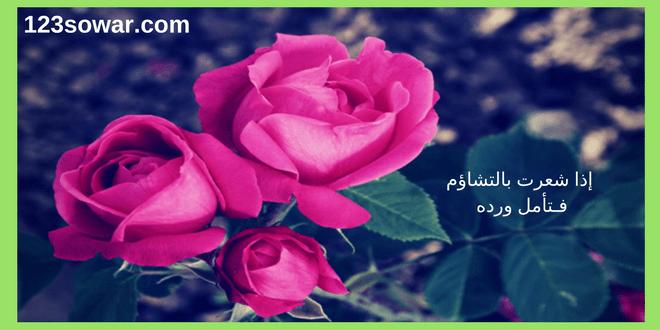 صور ورد طبيعي , وردة طبيعية زاهية