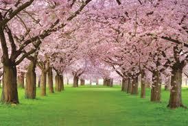 بالصور ورد طبيعي , وردة طبيعية زاهية 489 8