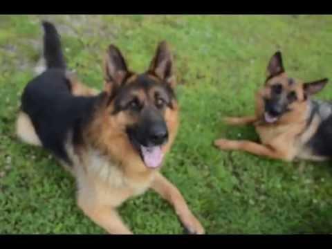 صورة انواع الكلاب , اجمل انواع الكلاب