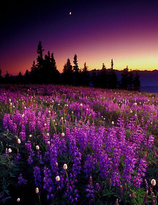 بالصور مناظر طبيعيه روعه , اجمل صور مناظر طبيعيه خلابه 5969 2