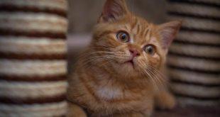 بالصور صور قطط صغيرة , خلفيات بنوتي للقطط على فيسبوك 6471 13 310x165