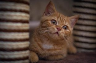 صور صور قطط صغيرة , خلفيات بنوتي للقطط على فيسبوك