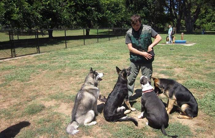 صورة كيفية تدريب الكلاب , تعليم الكلاب في منزل لاول مره الطاعة و الهجوم