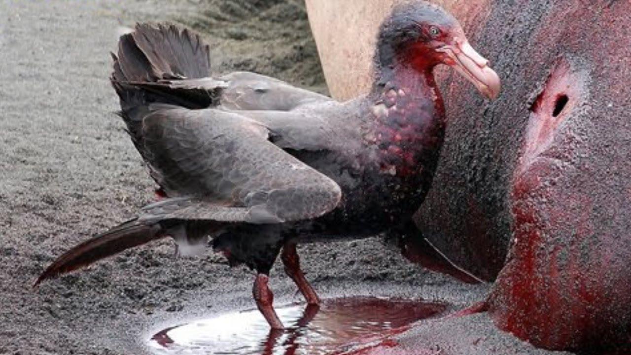 صور اكبر طائر في العالم , طيور رائعه حجمها مذهل