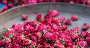 صور خلفيات ورود جميلة جدا , جمال الورد يسحر العقل