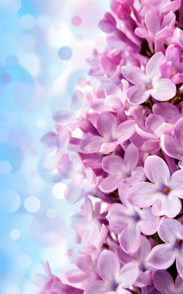 خلفيات ورود جميلة جدا جمال الورد يسحر العقل وداع وفراق