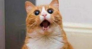 صور قطط مضحكة , قطط تضحك المكتئب