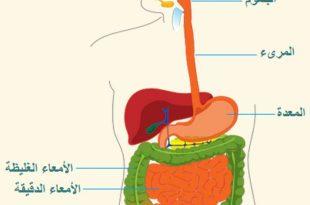 صور جسم الانسان بالصور , اكتشف ما في داخل جسمك بالصور