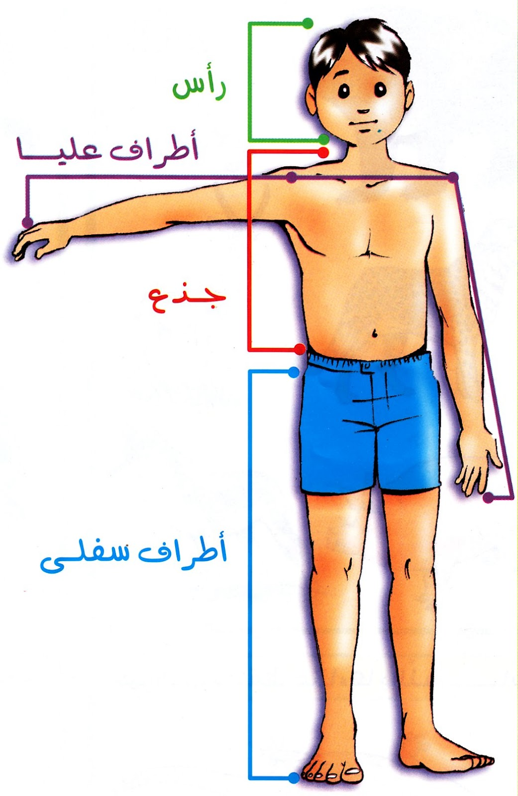 بالصور جسم الانسان بالصور , اكتشف ما في داخل جسمك بالصور 1291 4