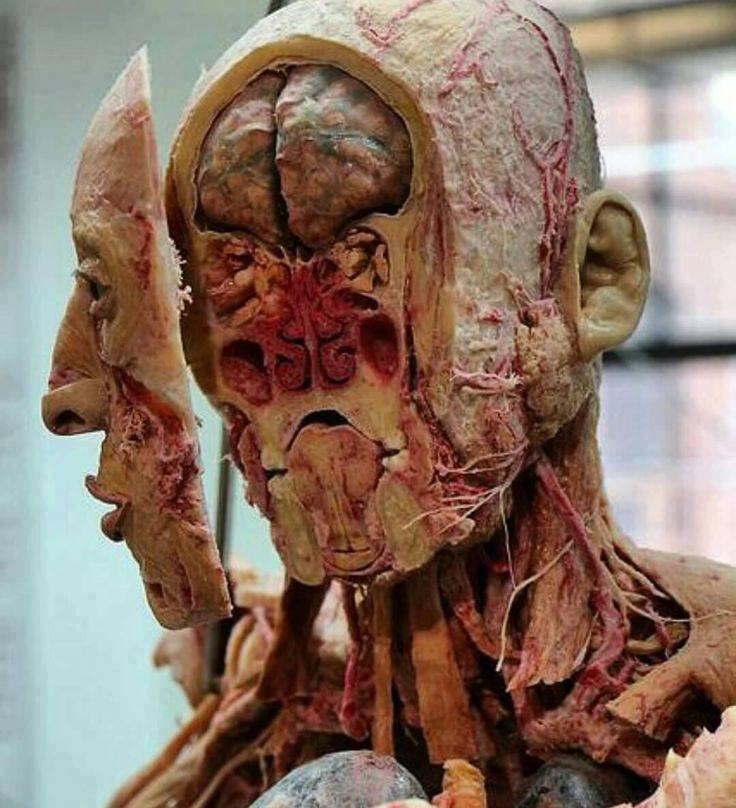 بالصور جسم الانسان بالصور , اكتشف ما في داخل جسمك بالصور 1291 7