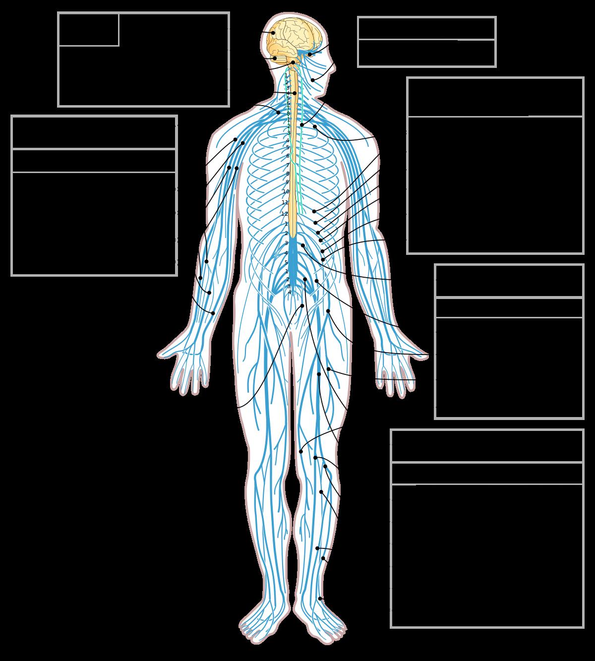 بالصور جسم الانسان بالصور , اكتشف ما في داخل جسمك بالصور 1291