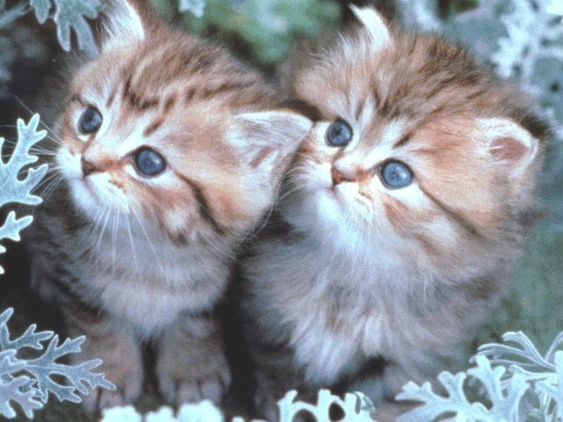 صور صور قطط جميلة , حب القطط للبشر