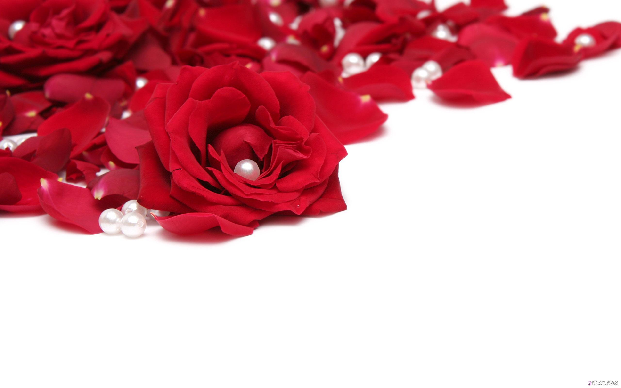 بالصور خلفيات رومانسية , الحب في خلفيه هاتفك 1350 9