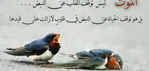 بالصور كلام حزين عن الموت , اصعب العبارات عن فقد من نحب 1444 7