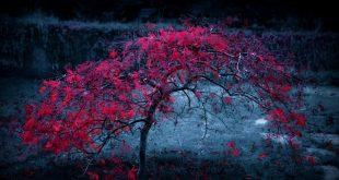 صور خلفيات رائعة , اجمل و احلى خلفيات مناظر طبيعيه