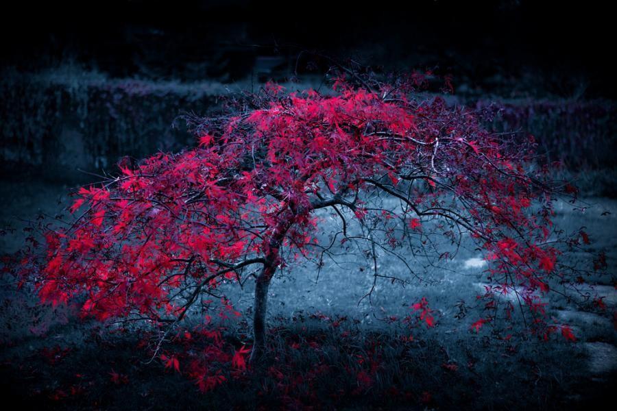صورة خلفيات رائعة , اجمل و احلى خلفيات مناظر طبيعيه