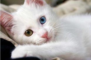 صور اجمل الصور للقطط في العالم , صور قطط لطيفة