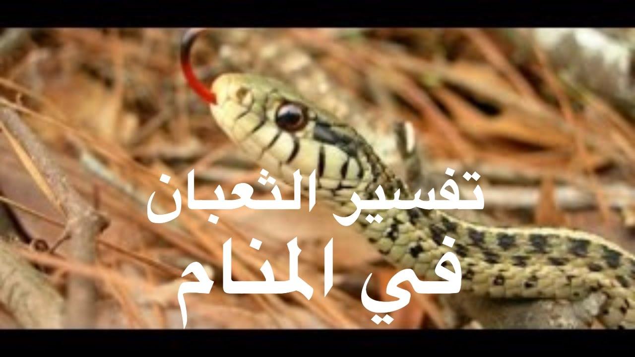 صور الثعبان في المنام , تفسير حلم الثعبان