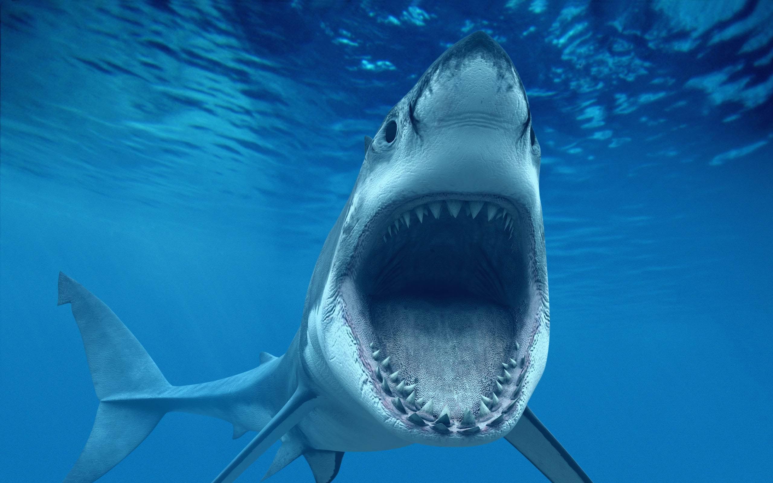 بالصور اكبر حيوان في العالم , تعرف على اكبر حيوان بالعالم 3829 2