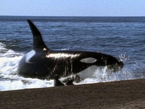 بالصور اكبر حيوان في العالم , تعرف على اكبر حيوان بالعالم 3829 3