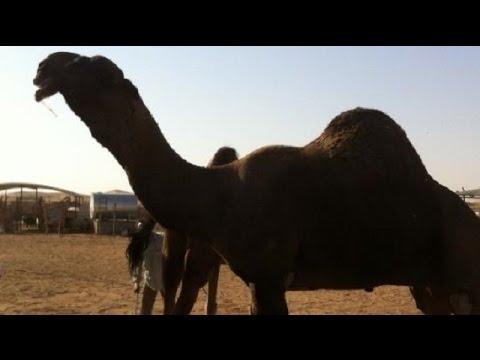بالصور اكبر حيوان في العالم , تعرف على اكبر حيوان بالعالم 3829 6