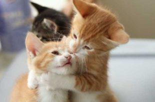 صور قطط جميلة , صور جميلة للقطط