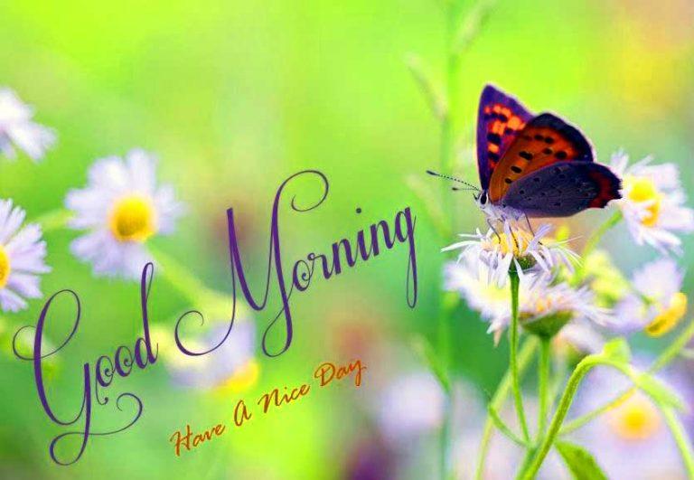 بالصور اجمل الصور المتحركة صباح الخير , صور جميلة متحركة لصباح الخير 3882 3