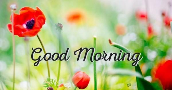 بالصور اجمل الصور المتحركة صباح الخير , صور جميلة متحركة لصباح الخير 3882 5