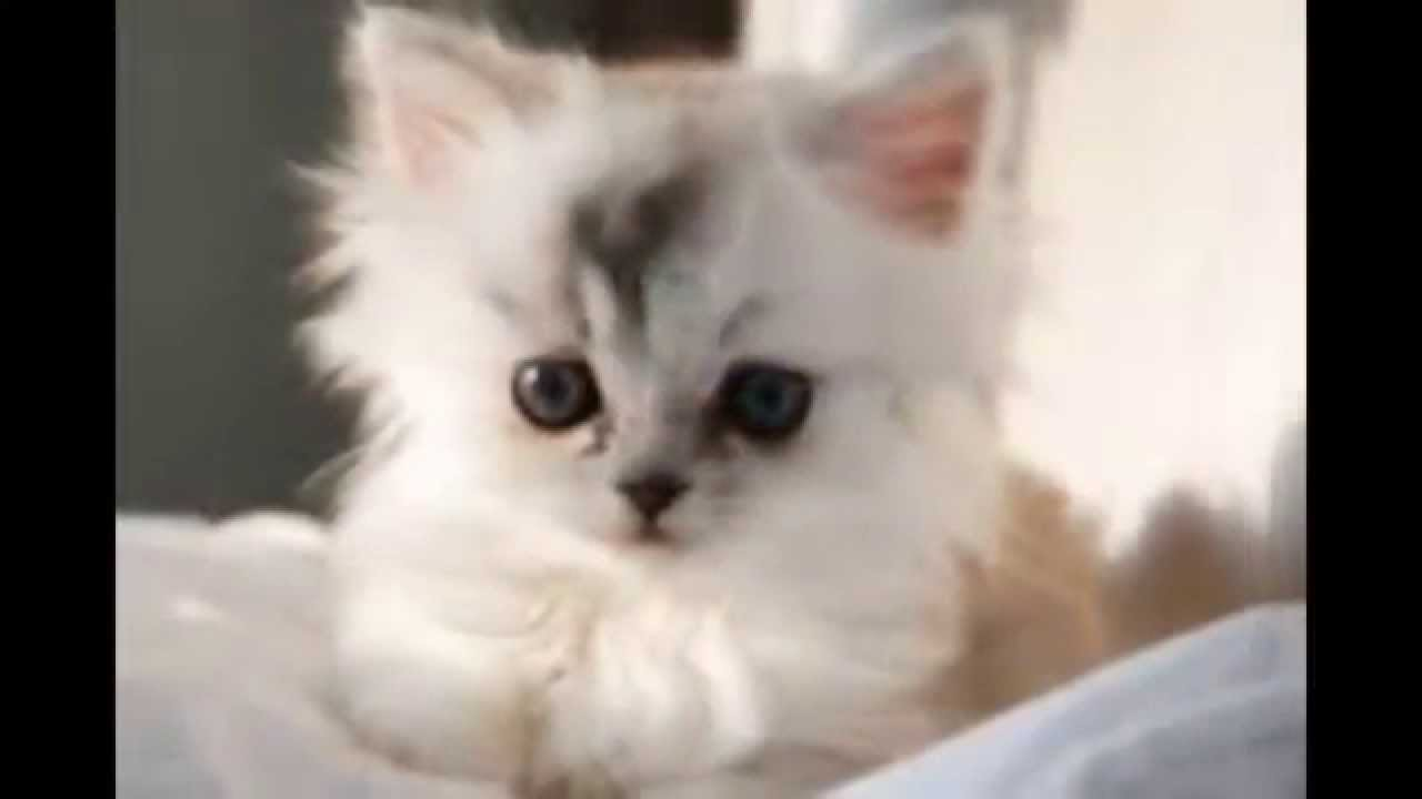 بالصور قطط وكلاب , صور اجمل قطط وكلاب اليفه وكيوت 4241 1