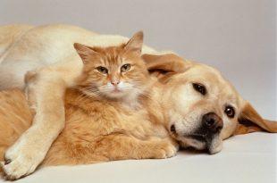 صور قطط وكلاب , صور اجمل قطط وكلاب اليفه وكيوت