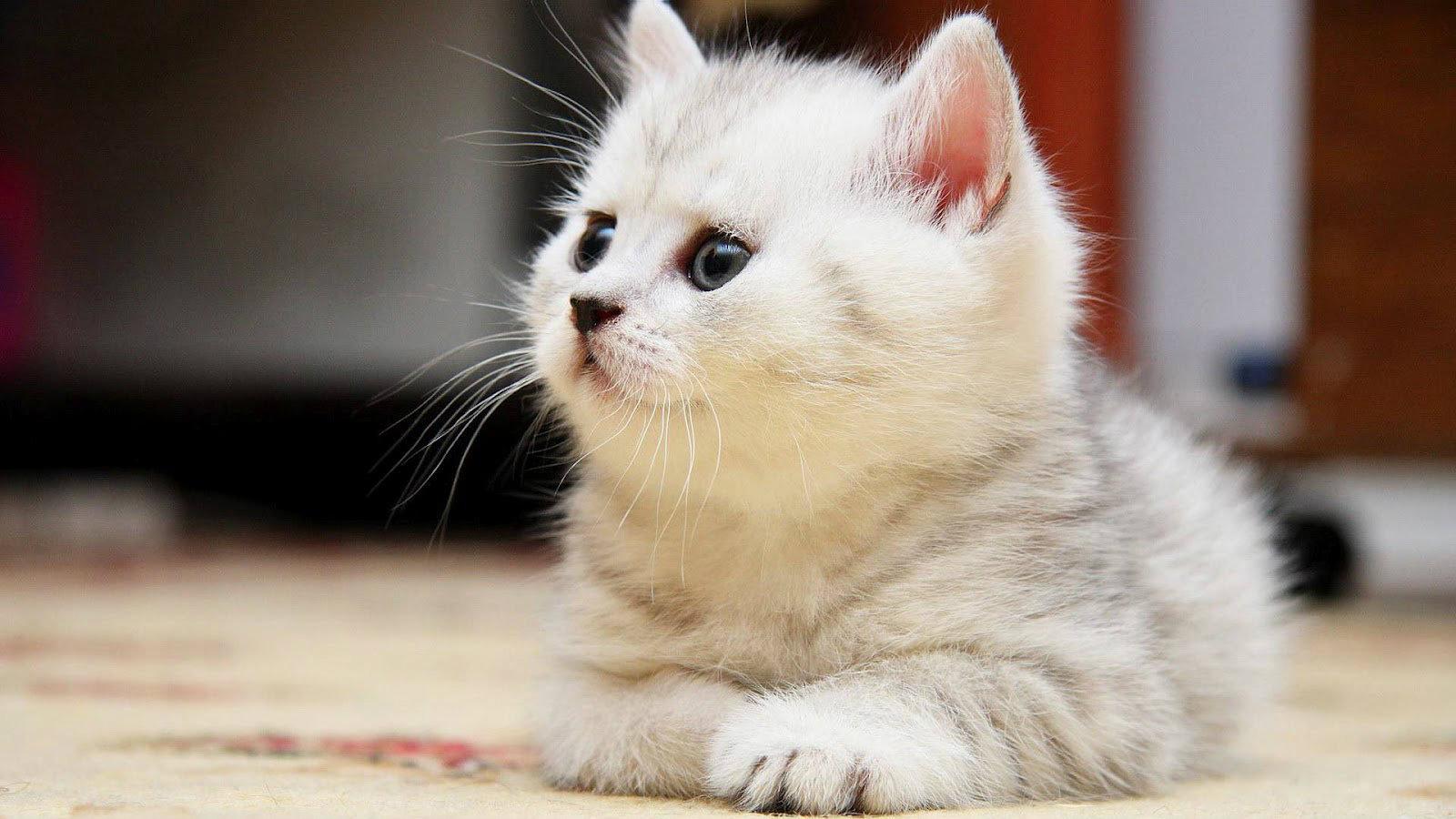 بالصور قطط وكلاب , صور اجمل قطط وكلاب اليفه وكيوت 4241 2