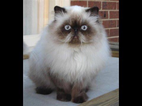 بالصور قطط وكلاب , صور اجمل قطط وكلاب اليفه وكيوت 4241 3