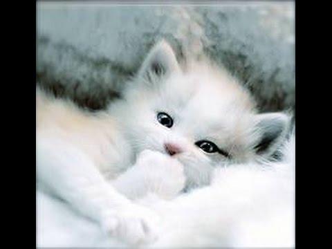 بالصور قطط وكلاب , صور اجمل قطط وكلاب اليفه وكيوت 4241 4