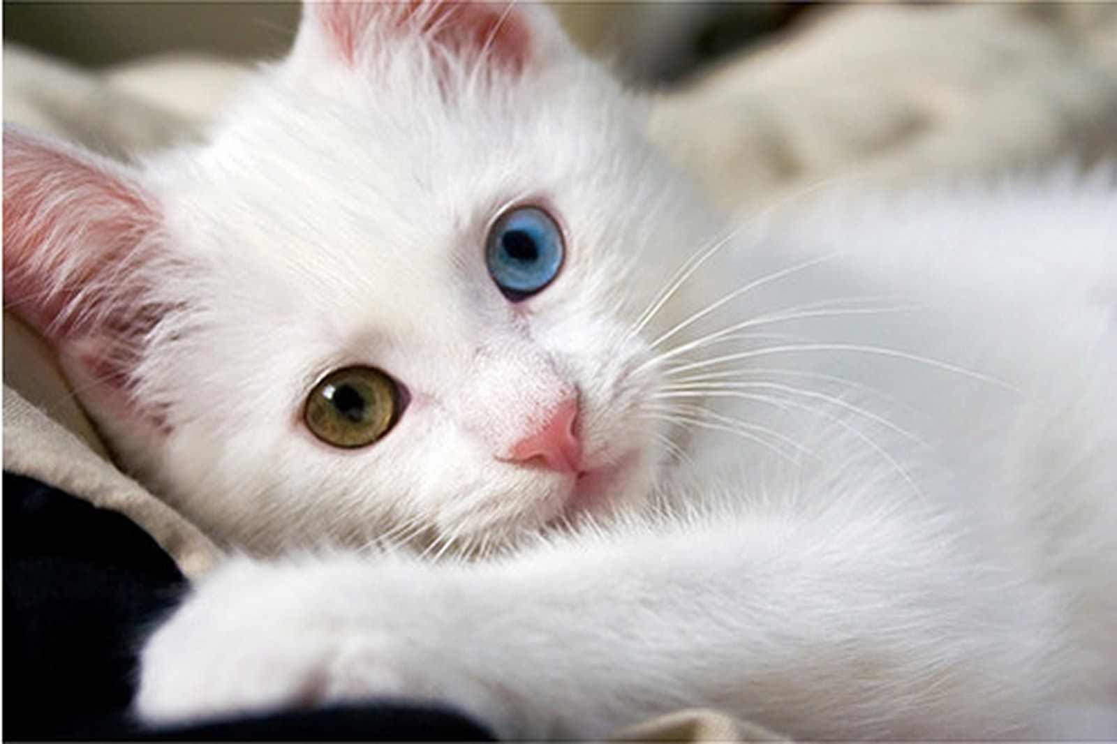 بالصور قطط وكلاب , صور اجمل قطط وكلاب اليفه وكيوت 4241 6