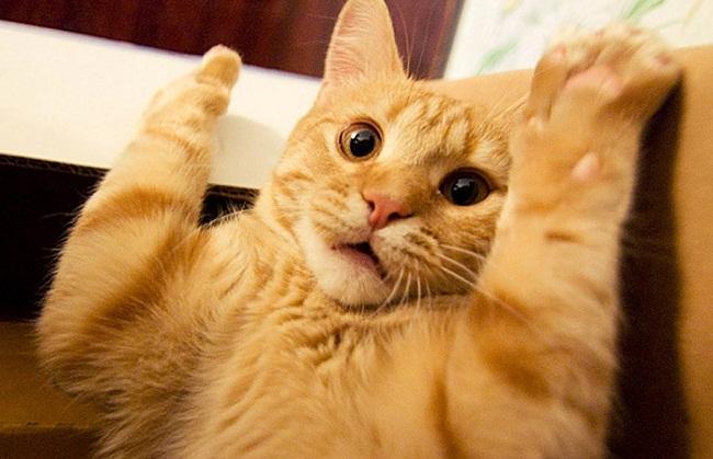 بالصور قطط وكلاب , صور اجمل قطط وكلاب اليفه وكيوت 4241 9