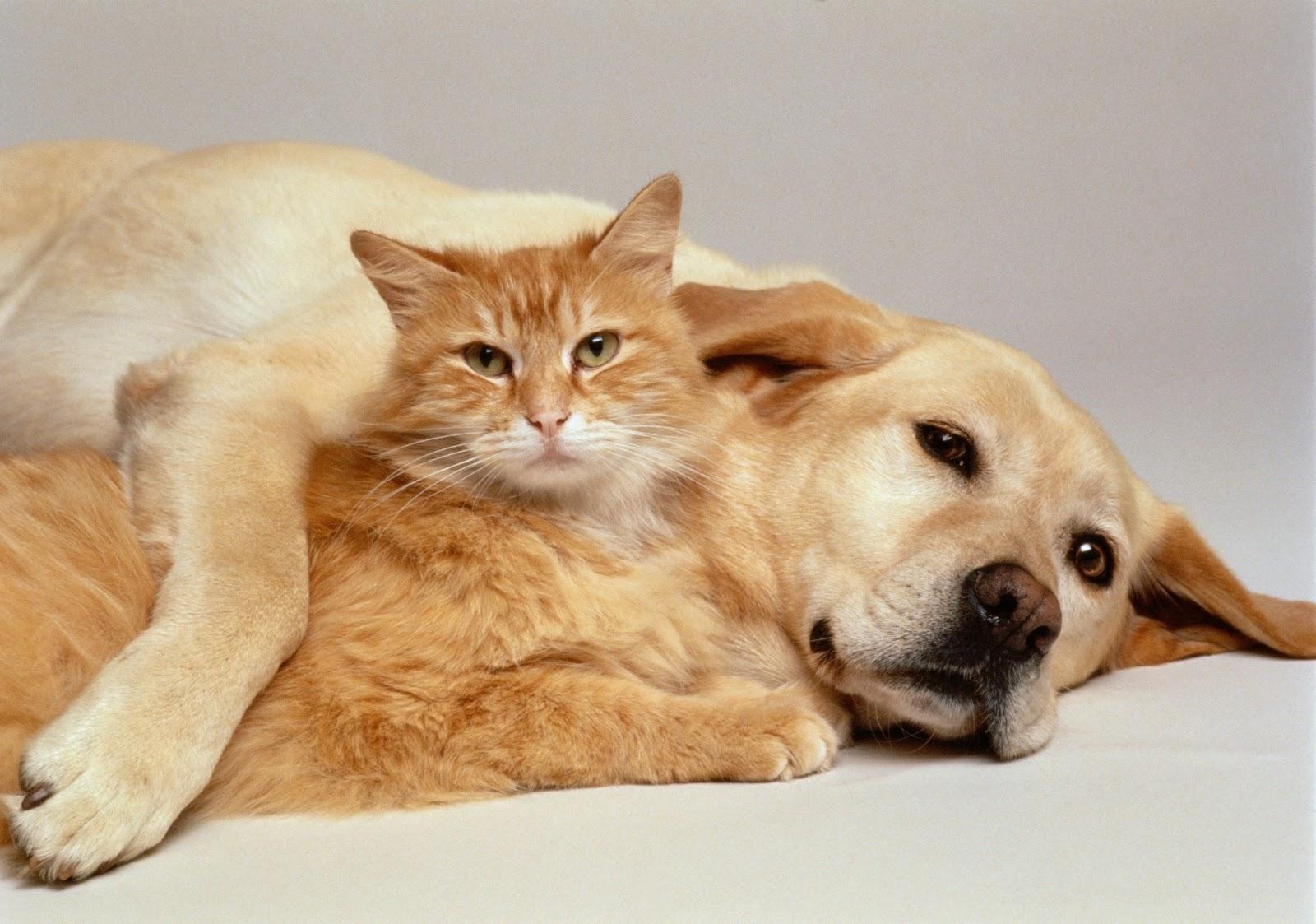 بالصور قطط وكلاب , صور اجمل قطط وكلاب اليفه وكيوت 4241